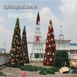 Cây thông khổng lồ từ 6 mét đến 15 mét
